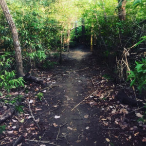 nosara trails